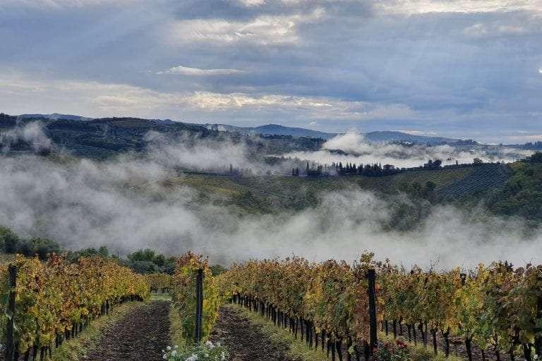 Chinati vineyards
